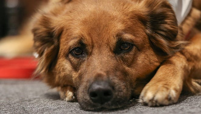 The Humane Society of Henderson County and their Animal Control Division have created a court diversion program called B.A.R.K. for animal control citations.