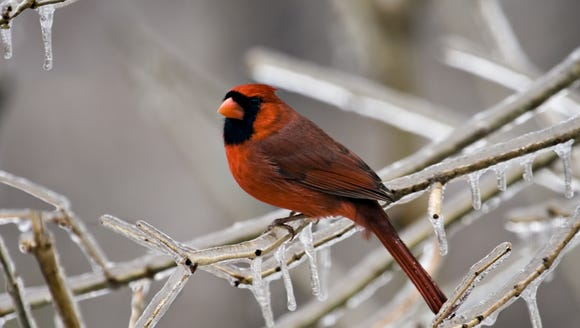 How do birds and animals survive this frigid weather?