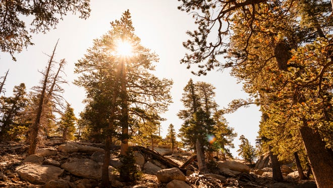 """The view from Round Valley """"Loop"""" trail in the San Jacinto Wilderness"""