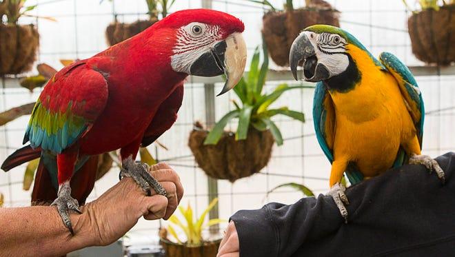 Parrot Talk at the Botanical Gardens & Nature Center.