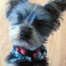 Oliver was stolen between 7:15 a.m. and 2:30 p.m. Wednesday