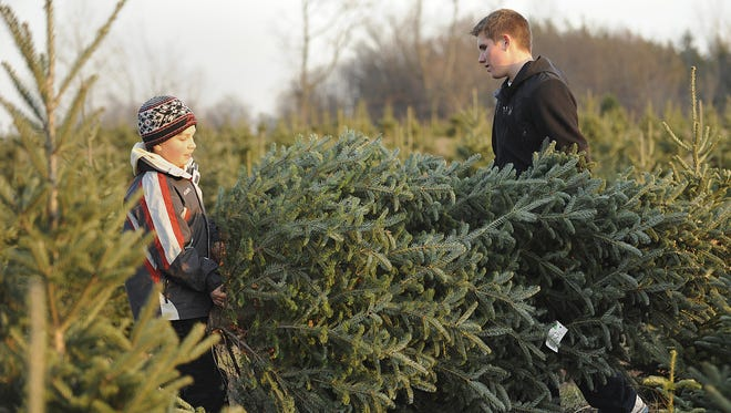 Jace Conlin (L) and his brother Drew carry out a Christmas tree that they cut down at the Peacock Road Tree Farm in Laingsburg. Photo taken 11/29/2012 by Greg DeRuiter.