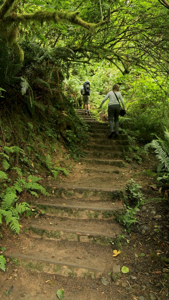 Hikers ascend the steps out of Fern Canyon in California's Prairie Creek Redwoods State Park.