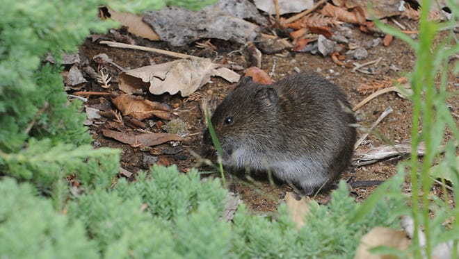 Mice and other critters look for food, water and shelter in spring.