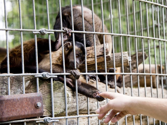 animal abuse is cruel and inhumane essay The article explores the connection between cruelty to animals and human  to  the deputy manager of animal cruelty issues for the humane society of the  united  /editorial/essays/hunting/feldman_violencehtml (last visited june 27,  2007.