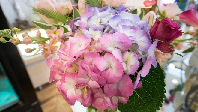The right time to prune your hydrangea depends on when the plant sets its flower buds.