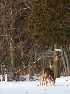 Deer found a snack on Verona Road Monday afternoon. More snow is in the forecast for our area.