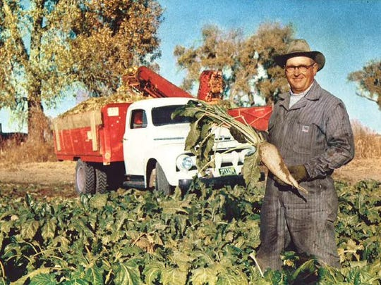A sugar beet farmer holds up his crop in the 1950's.