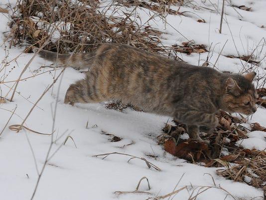 -OSH Feral Cat Release 012915 JS 02.jpg_20150129.jpg