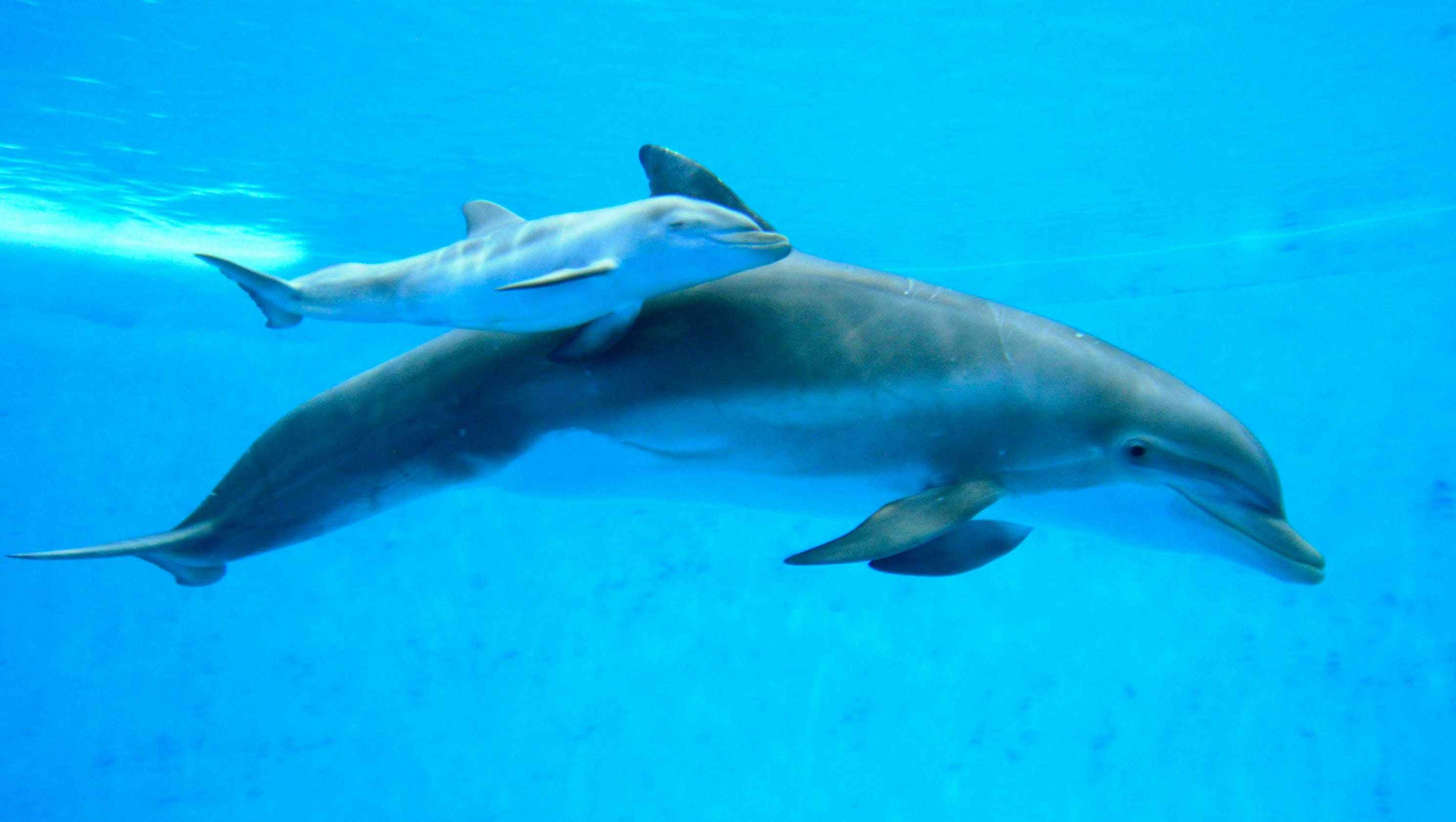 Controversy: Will Tourists Soon Swim With Captive Dolphins