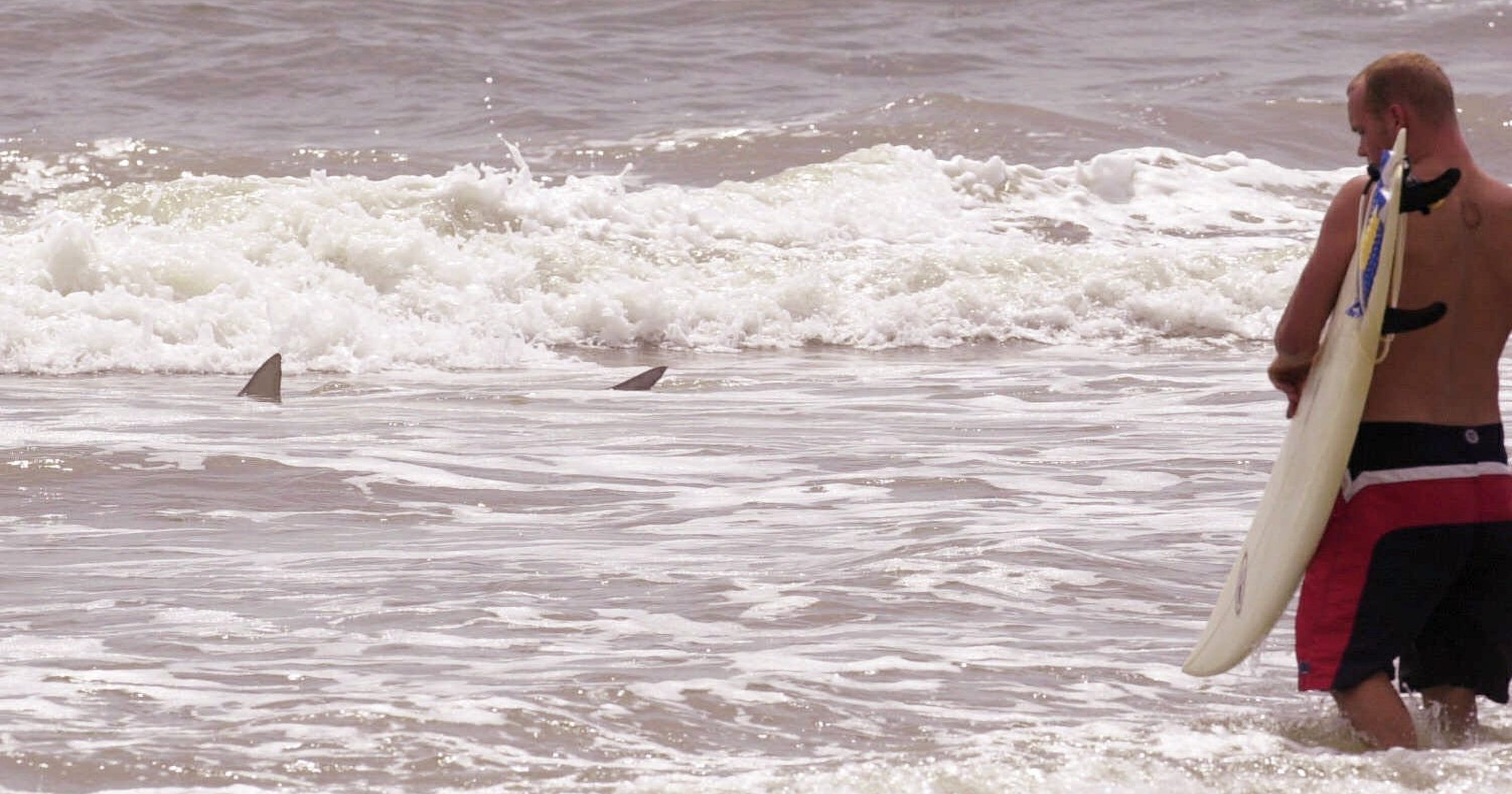New Smyrna Beach, FL: Third shark bite victim is from Nashville