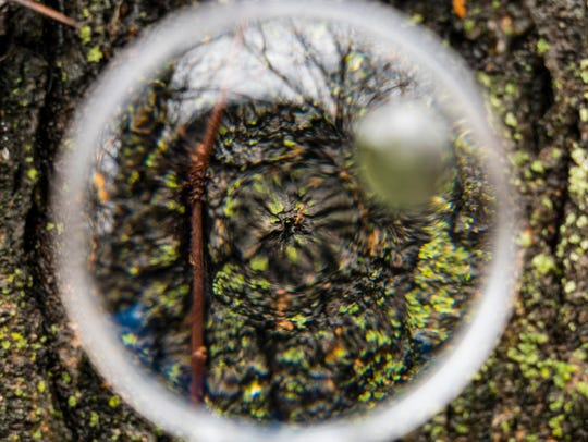 Moss as seen though a magnifying glass in Hiawatha