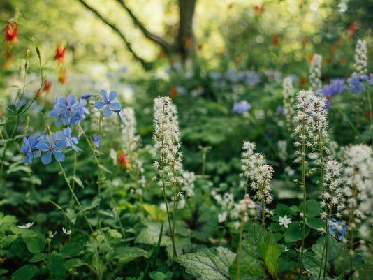 636565630379256834-spring-wildflowers.jpg