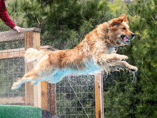 Levon-the-diving-dog-credit-Dean-Lake.jpg