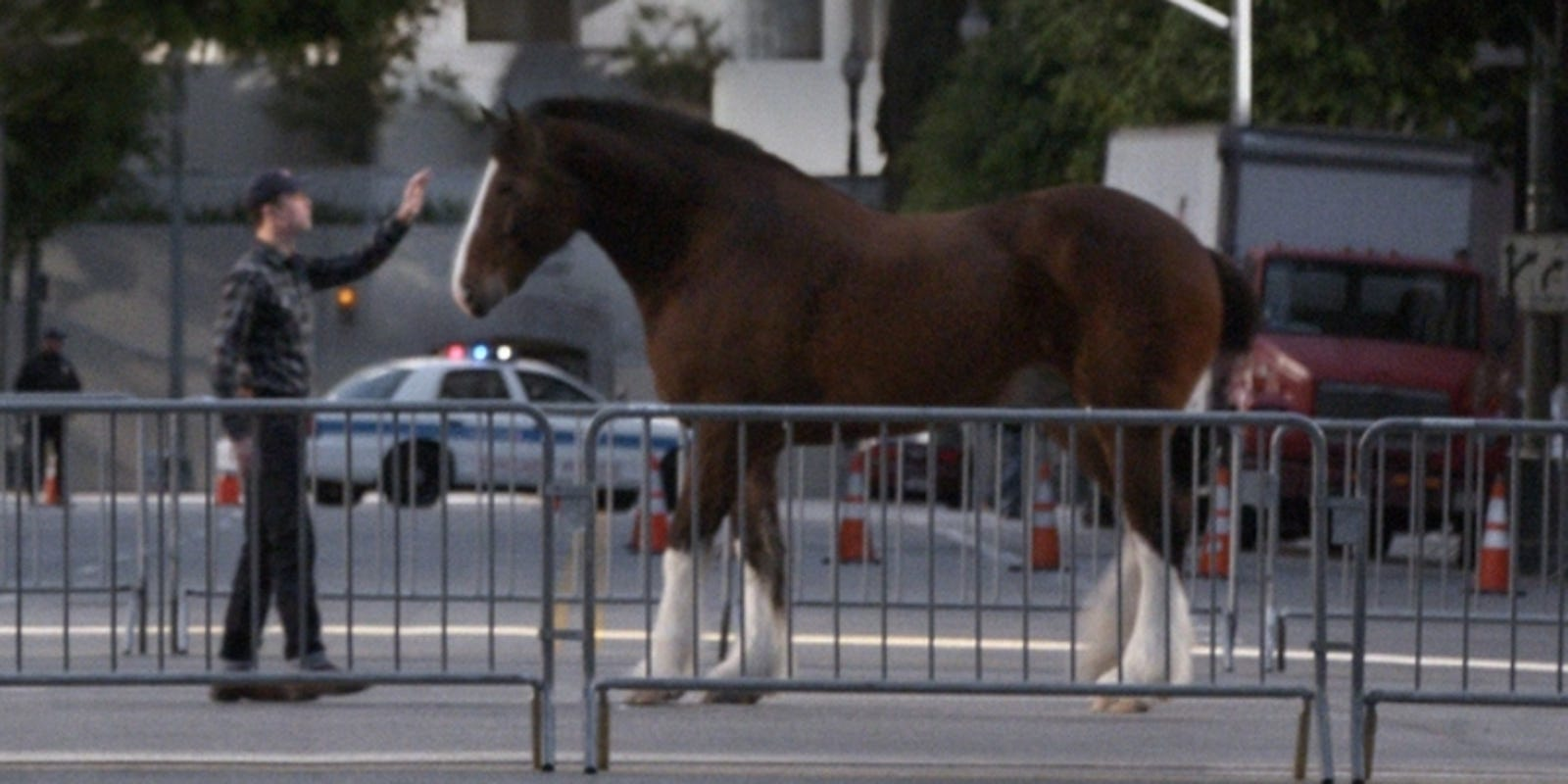 Budweisers clydesdale wins ad meter by a nose aloadofball Images