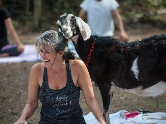A goat nuzzles Angel Errigo during Goat Yoga in Melbourne.