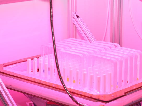 Mustard plant seeds are packaged for a trip to the International Space Station. UW-Madison astrobotanist Simon Gilroy is testing how plants grow in zero gravity to some day figure out how travelers to Mars can grow their food.