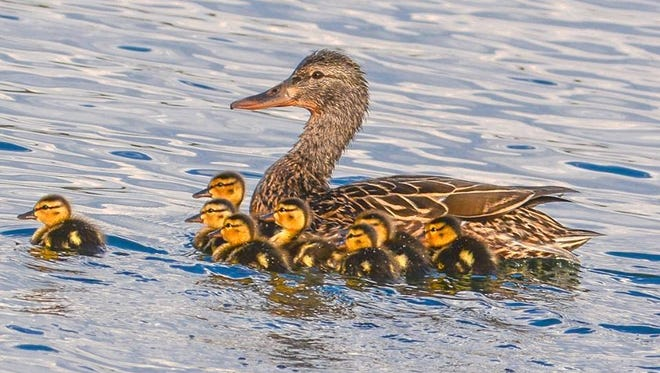 Photographer Mark Stambaugh snapped this  young family paddling in Alto Lake.