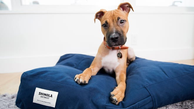 Pets staying with their owners at the James Hotels in New York and Chicago are pampered by Shinola pet products.