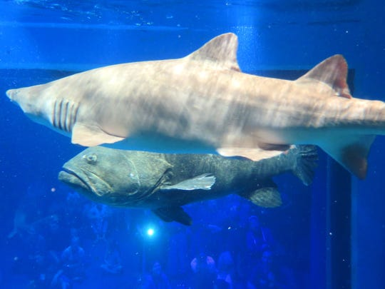 Visitors to Wonders of Wildlife will soon be able to get an up close experience with sharks, goliath groupers, and other fish at the new Out To Sea Shark Dive. Visitors don wetsuits and diving helmets and climb inside a shark cage that takes you into the aquarium's shark tank.