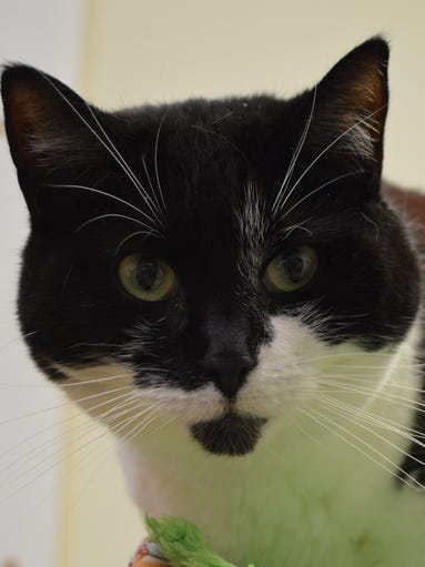 Boo Boo Marie is a sweet girl with excellent head-butting