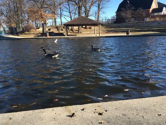 636245815140328411-LCP-geese.jpg