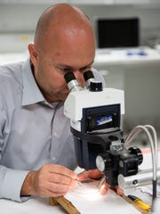 Research entomologist Mark Clifton studies locally collected mosquitoes at the Collier Mosquito Control District offices on Tuesday, March 1, 2016, in Naples.
