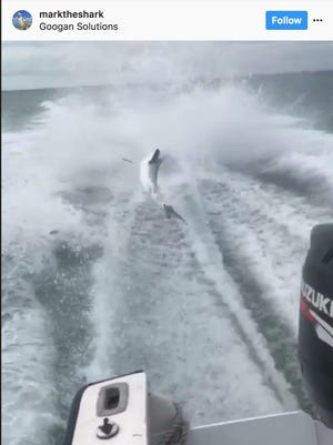 A shark appears to flail behind a speeding boat in a video on Instagram.