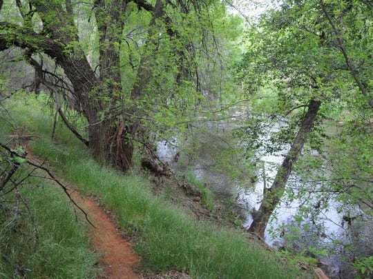 The easy hiking trail at the Page Springs Hatchery near Cornville traces Oak Creek.