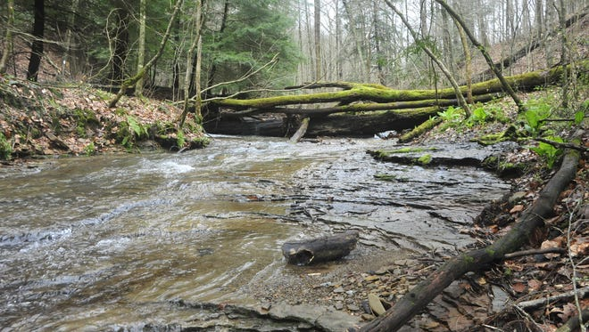 Mohican Wildlife Weekend takes place from Friday to Sunday.