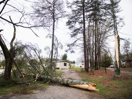 A tree is split following a storm on East Darby Road in Taylors on Monday, April 3, 2017.