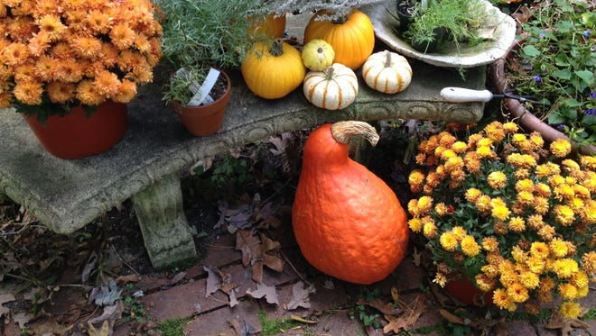 Pumpkins come in so many shapes and sizes.