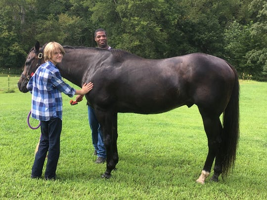 Equine assisted activities, or ground activities with
