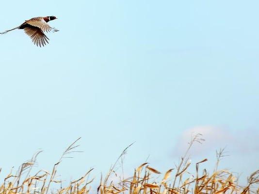 1019 Pheasant Opener 8987.jpg