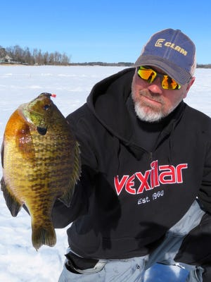 This dandy bluegill was caught by Steve Taylor during a late ice fishing trip.
