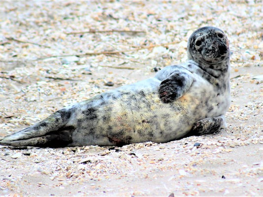 seal-from-MMSC