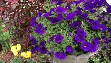 Memorial Day weekend garden sales mark kick off to planting season