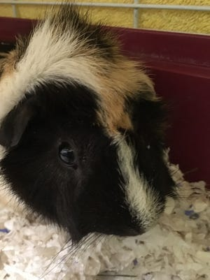 Polaroid was found in a field and brought into the Oshkosh Area Humane Society.