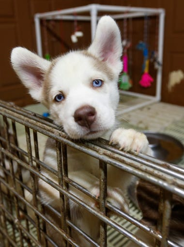 Dog Breeder Kevin Beauchamp
