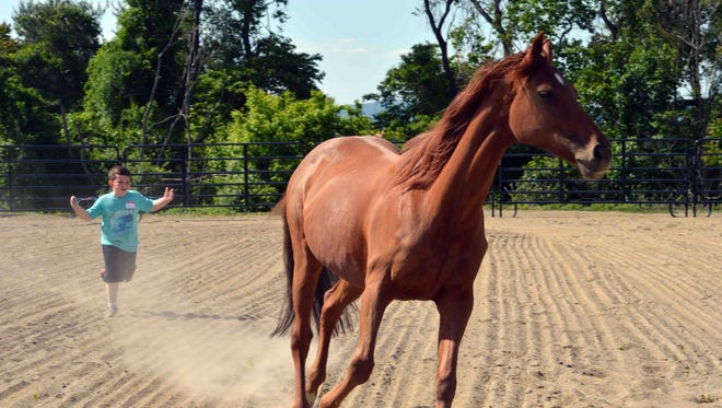 A boy chases a horse at Spring Reins of Life in Hillsborough.
