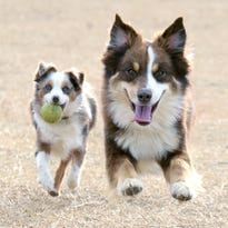 Dog park planned for Springfield