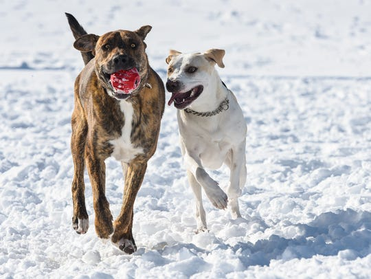 Moki and Bernie play together Friday, March 9, at the