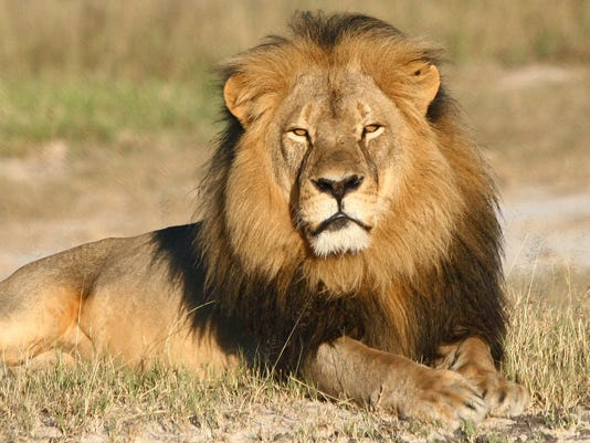 Dentist Walter Palmer in contact with authorities over killing Cecil the lion