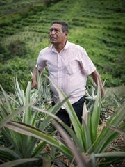 Camillo Marenco went from a field laborer to a farmer who employs his neighbors to help harvest his crops of pineapples. Through Rainbow Network micro loans and training, Camillo is a successful businessman and a leader in his community.