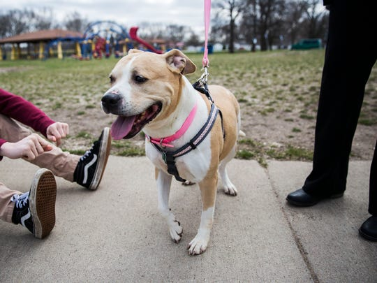 Pinky, a 9-year-old dog, is released from the city's