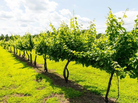 Costa Ventosa Vineyard and Winery in Whaleyville on