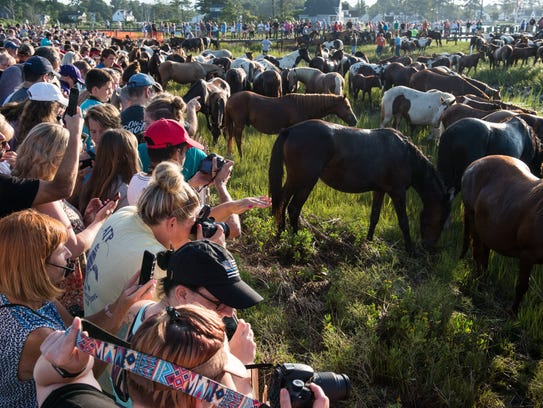 Crowds of people take photos of ponies after the Chincoteague