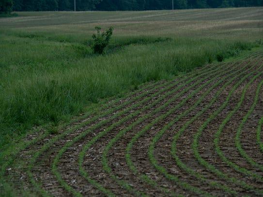 A grass buffer area on farm land near highway 68 in