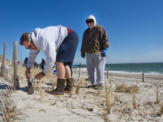 Dune Grass Event Recruits Record Number Of Volunteers