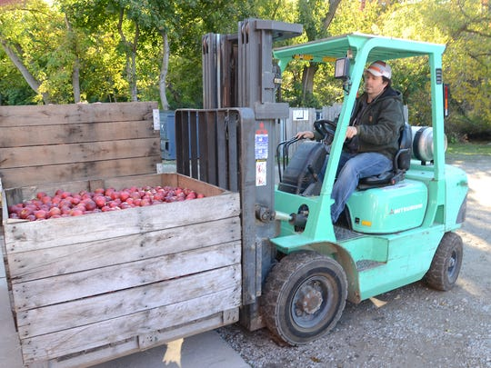 Parmenter's mananger Robert Nelson uses a forklift to bring another crate of apples towards the cider making room a the Northville mill.